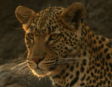 photographic wildlife safaris with endeavour safaris