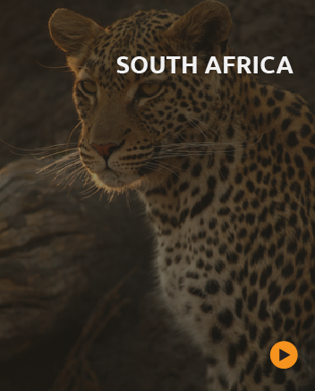 tailor made safaris to south africa