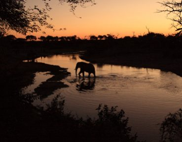 safaris in southern africa with endeavour safaris